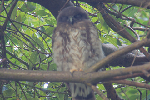 owl13.jpg